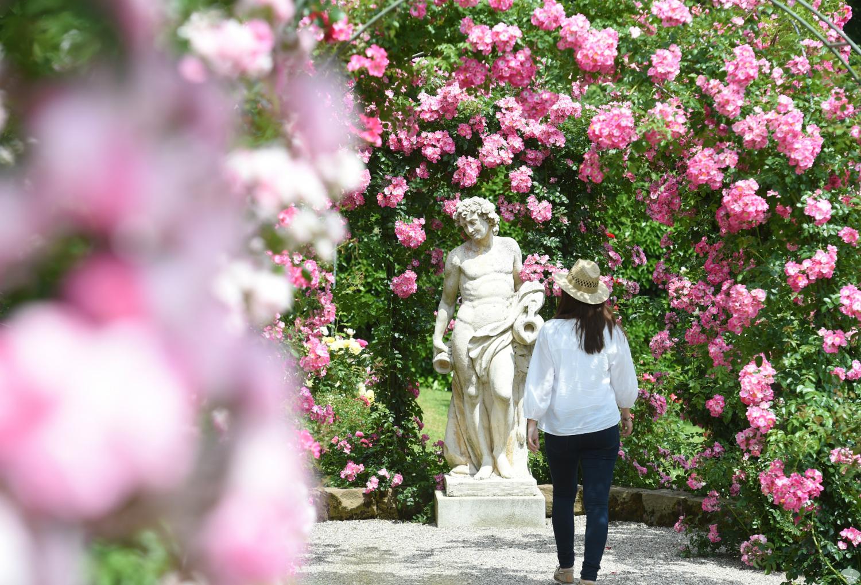 Stunning en el jardin de rosas gallery for Cancion jardin de rosas
